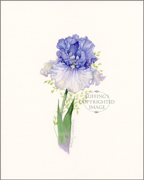 Blue Iris Original Watercolor Floral Painting by Abby Laurence