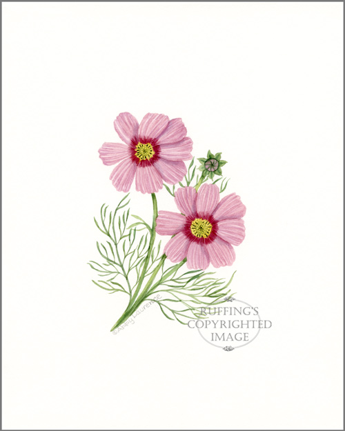 Pink Cosmos Flowers Original Watercolor Floral Painting by Abby Laurence