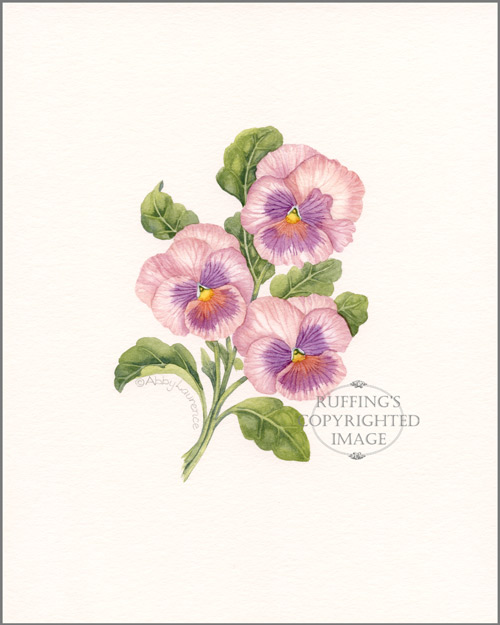 Mauve Pansies Original Watercolor Floral Painting by Abby Laurence