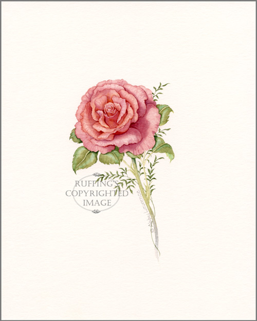 Pink Rose Original Watercolor Floral Painting by Abby Laurence