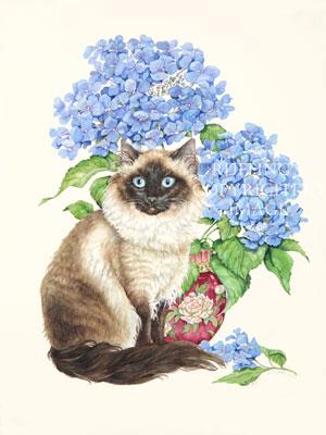 Ragdoll and Hydrangeas by Abby Laurencel