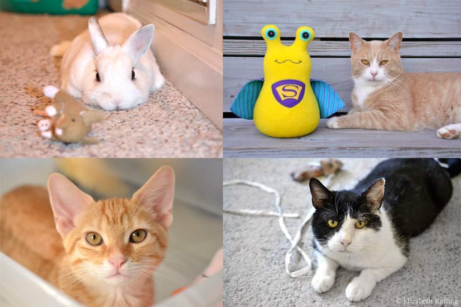 Super Slug Hug Me Slug plush toy by Elizabeth Ruffing, and rescued kitty cats and bunny