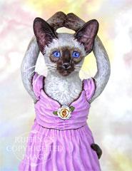Jazzie the Siamese Ballerina, Original One-of-a-kind Cat Folk Art Doll Figurine by Max Bailey