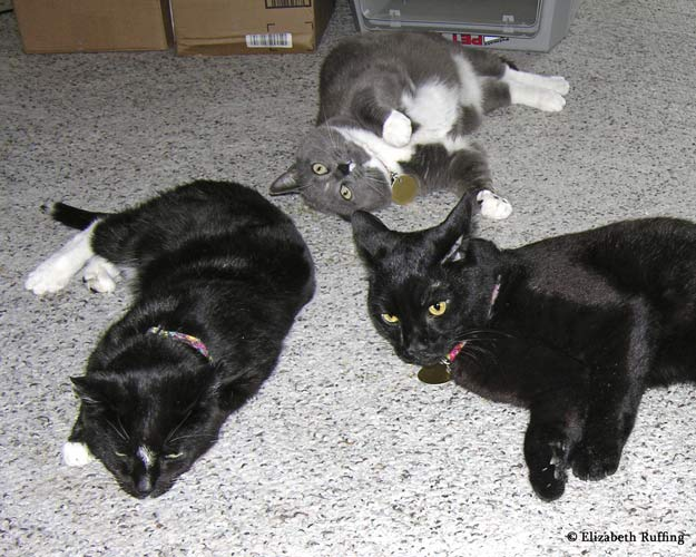 Zoomie, black kitty cat playing with catnip with friends by Elizabeth Ruffing