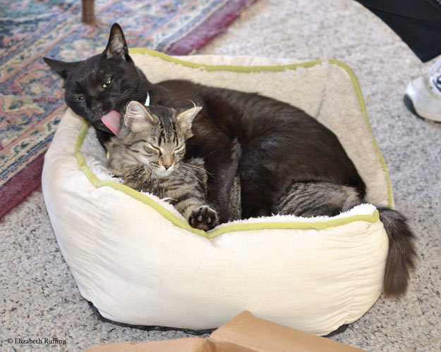 Zoomie, black kitty cat giving Bertie a bath by Elizabeth Ruffing