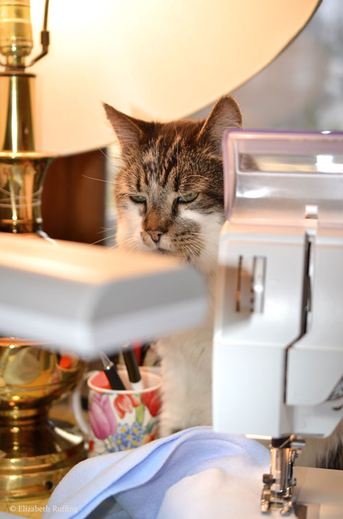 Mr Bear, tabby-and-white cat behind my sewing machine, Elizabeth Ruffing