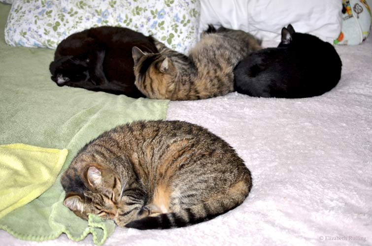 Cuddling sleeping black and tabby cats curled up together on my bed, Elizabeth Ruffing