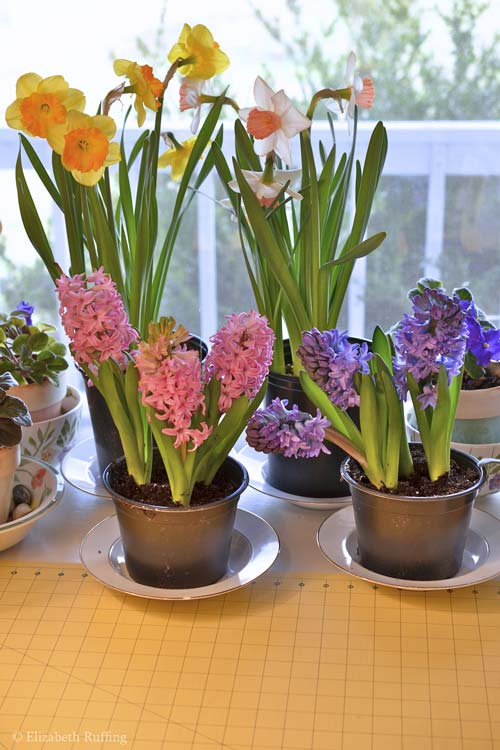 Easter flowers, narcissus and hyacinths on the work table of artist Elizabeth Ruffing