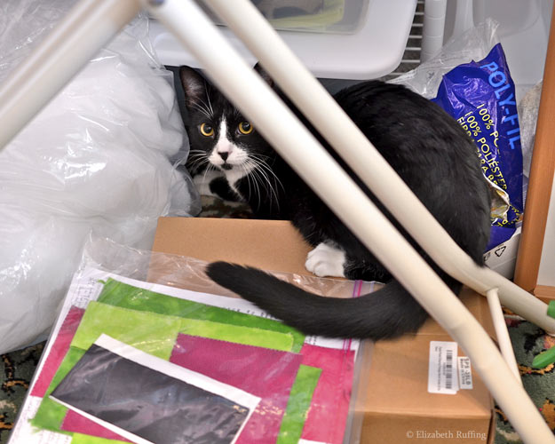 Jojo, black-and-white tuxedo cat peeking out from a pile of craft supplies, in artist Elizabeth Ruffing's workroom