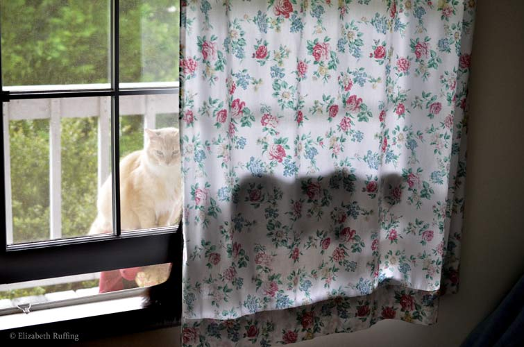 Phoebe, tabby cat behind a floral curtain, with Santana, orange cat, looking in the window Elizabeth Ruffing
