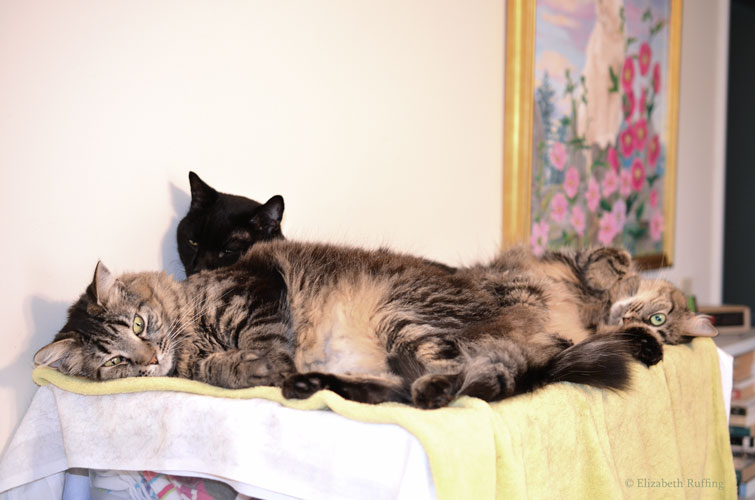 Zoomie, black kitty cat with Bertie and Phoebe sitting on top of him by Elizabeth Ruffing