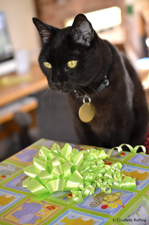 Zoomie, black kitty cat with a birthday present by Elizabeth Ruffing