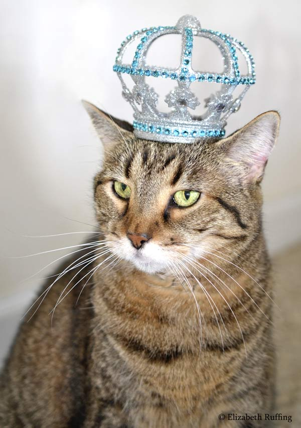 Queen kitty cat, wearing a crown, photo by Elizabeth Ruffing