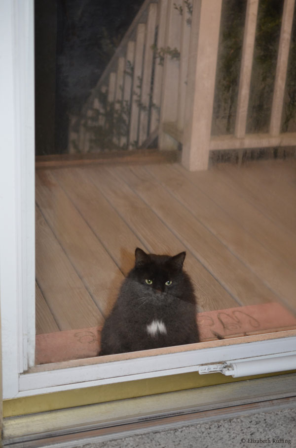 Black kitty cat at the door, trick or treat, photo by Elizabeth Ruffing