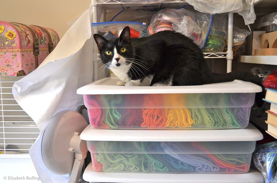 Jojo kitty cat on boxes of fabric, Elizabeth Ruffing