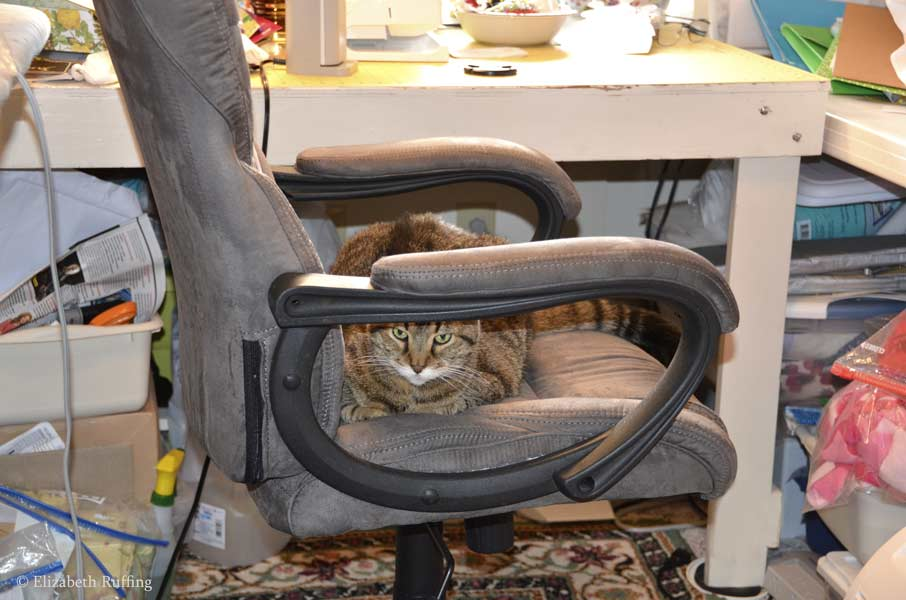 Henrietta kitty cat takes over my office chair, Elizabeth Ruffing