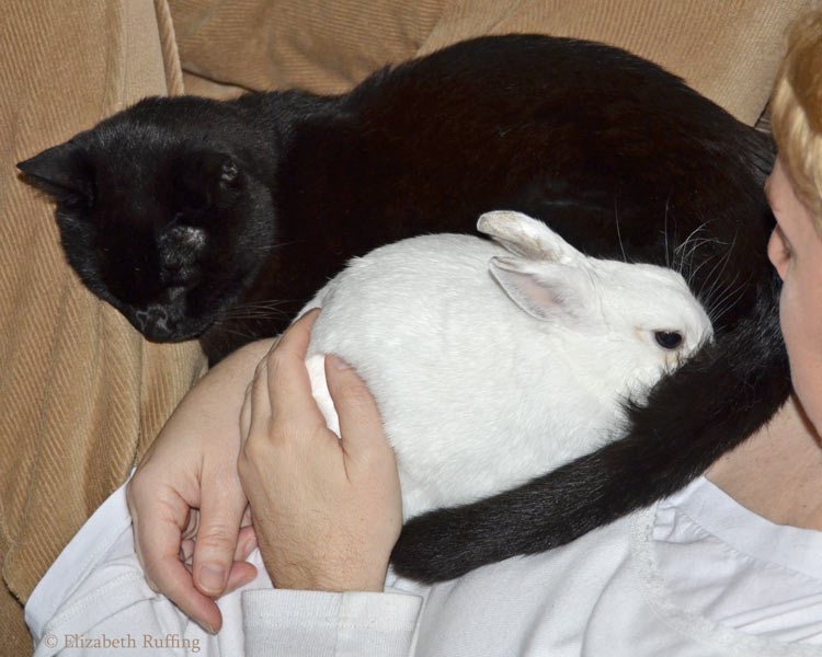 Kitty cat and bunny rabbit cuddling on my lap by Elizabeth Ruffing