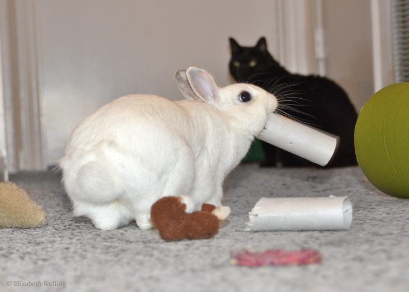 Oliver Bunny playing with a toilet paper roll, by Elizabeth Ruffing