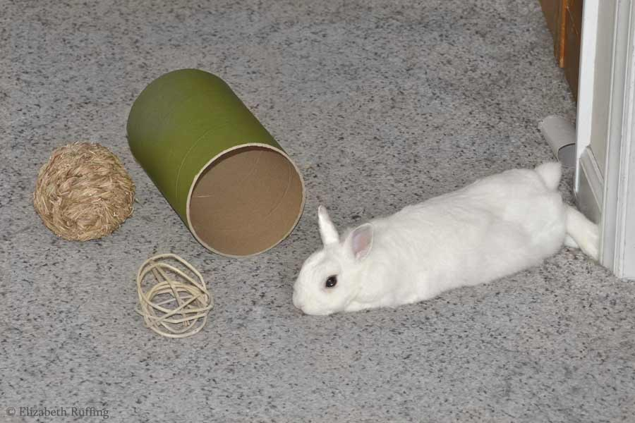 Oliver Bunny, stretched out in hallway, Elizabeth Ruffing
