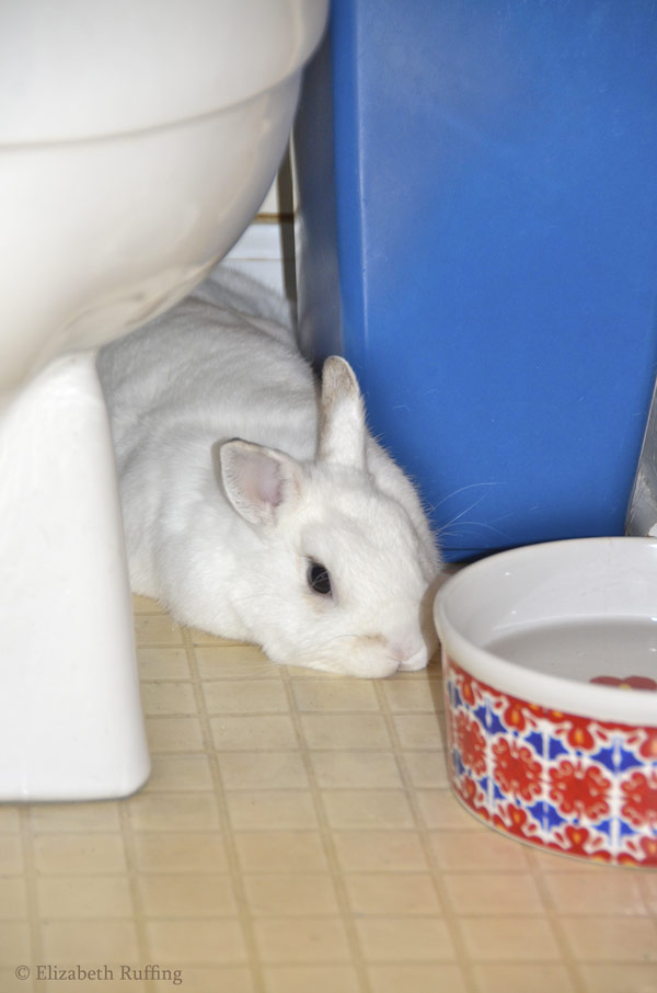 Oliver Bunny, stretched out behind toilet, Elizabeth Ruffing