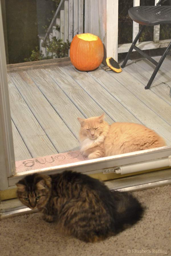 Santana the cat at the door for Halloween by Elizabeth Ruffing