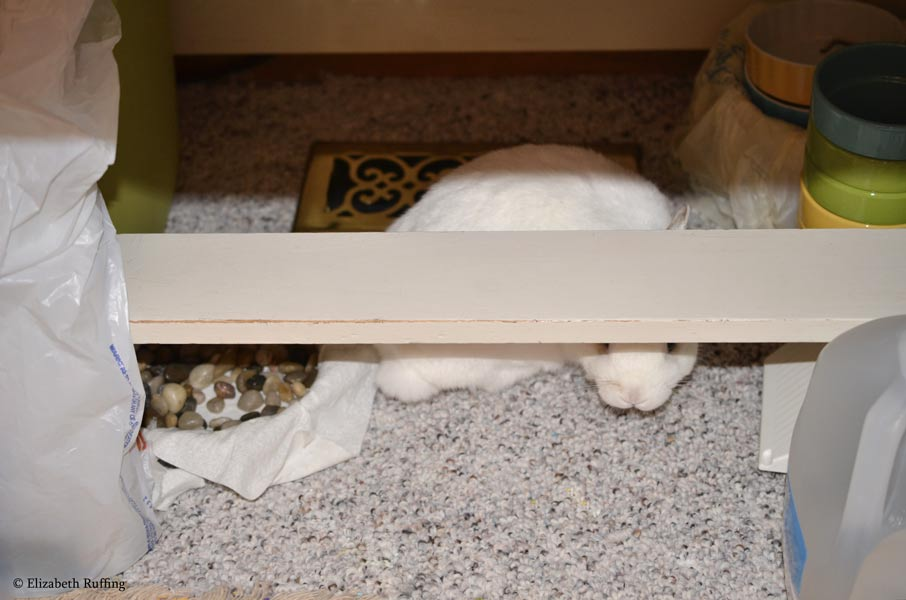 Oliver bunny peeking out from under my work table Elizabeth Ruffing