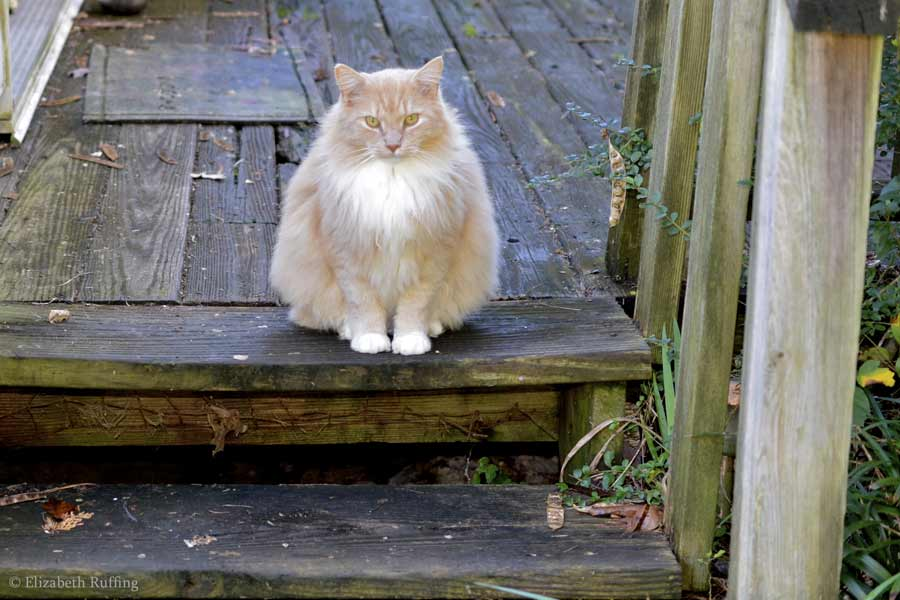 Santana the cat, sitting on the step, Elizabeth Ruffing