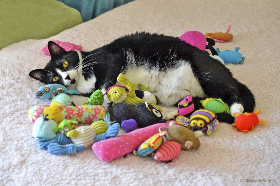 Jojo, tuxedo cat, lying in a pile of cat toys on the bed, Elizabeth Ruffing