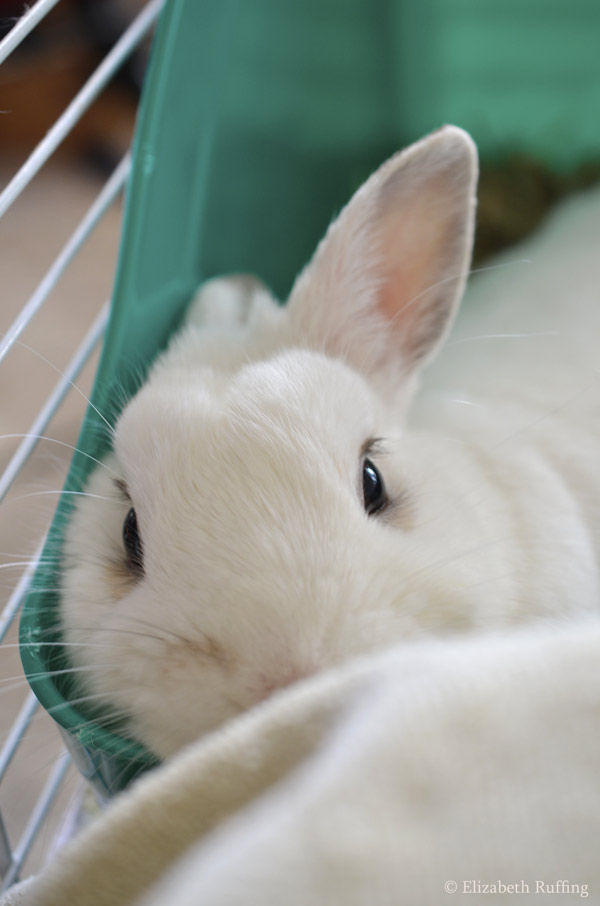 Oliver Bunny watching me by Elizabeth Ruffing