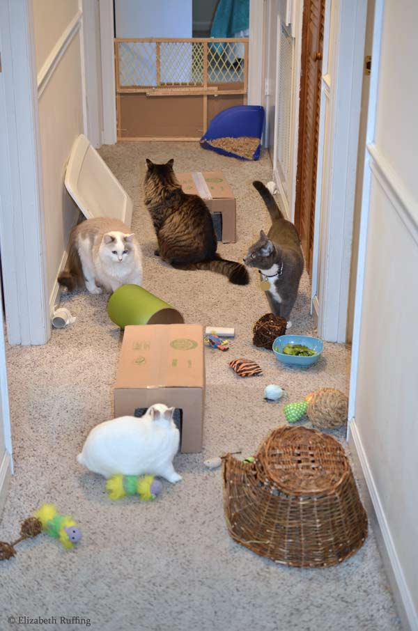 Oliver Bunny and kitties playing with my obstacle course by Elizabeth Ruffing