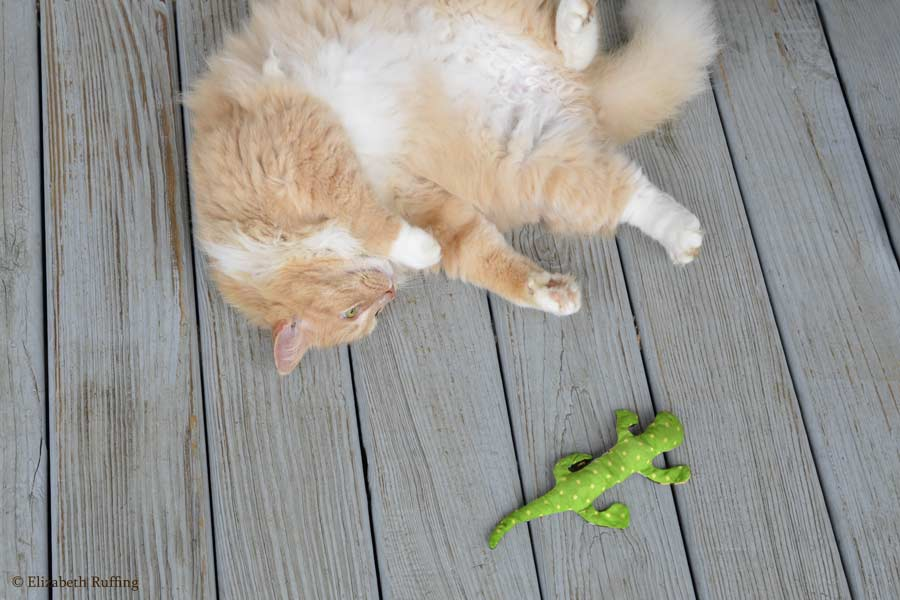 Santana playing with his catnip salamander by Elizabeth Ruffing