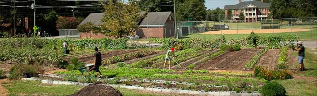 Raleigh City Garden, Twitter screenshot