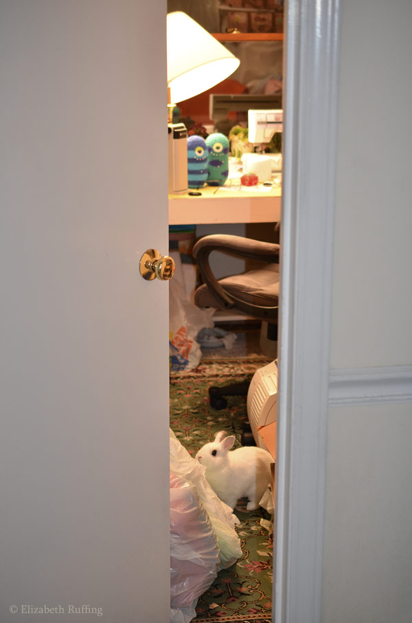 Oliver Bunny investigating my workroom by Elizabeth Ruffing