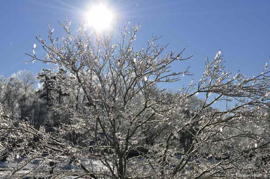 Ice-covered tree branches, by Elizabeth Ruffing