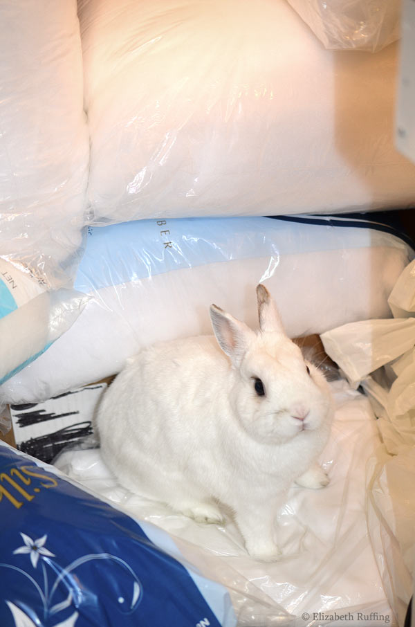 Oliver Bunny white rabbit sitting on Poly-Fil stuffing by Elizabeth Ruffing