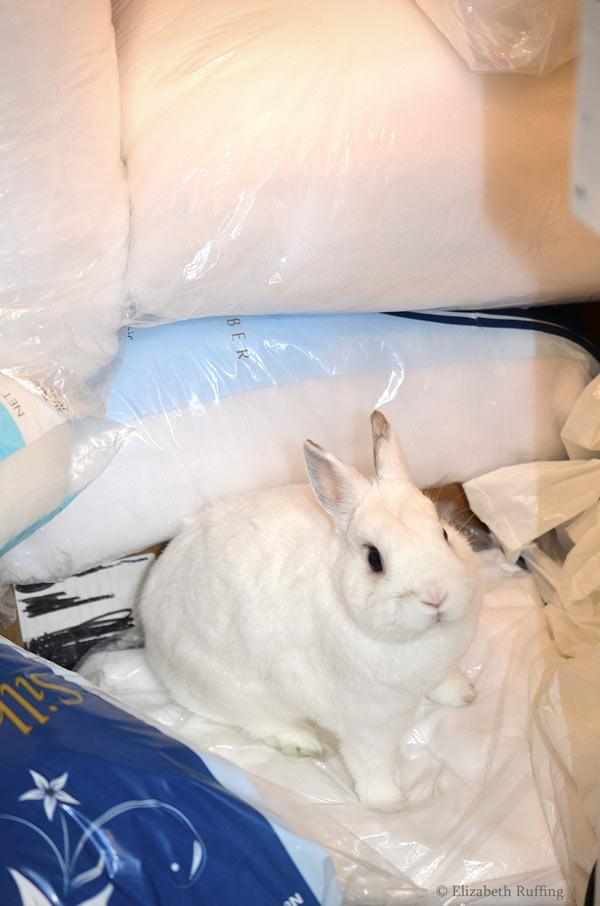 Oliver Bunny white rabbit sitting on Poly-Fil stuffing by Elizabeth Ruffing