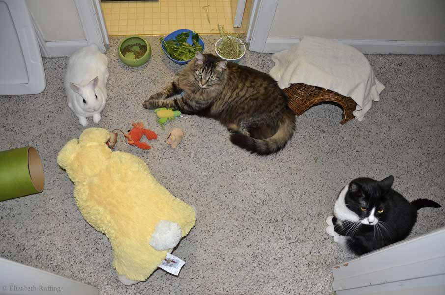 Oliver Bunny, and kitties Bertie and Jojo, hanging out, relaxing, by Elizabeth Ruffing