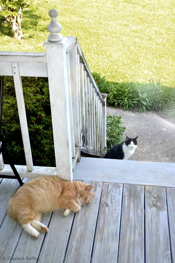 Trouble black and white kitty cat sneaking up on Santana while he is sleeping, by Elizabeth Ruffing
