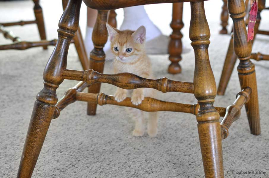 Juno, orange kitten, climbing a chair by Elizabeth Ruffing