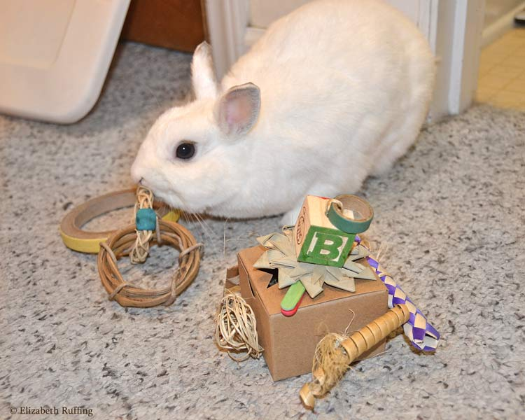 Oliver Bunny playing with his new toys, by Elizabeth Ruffing