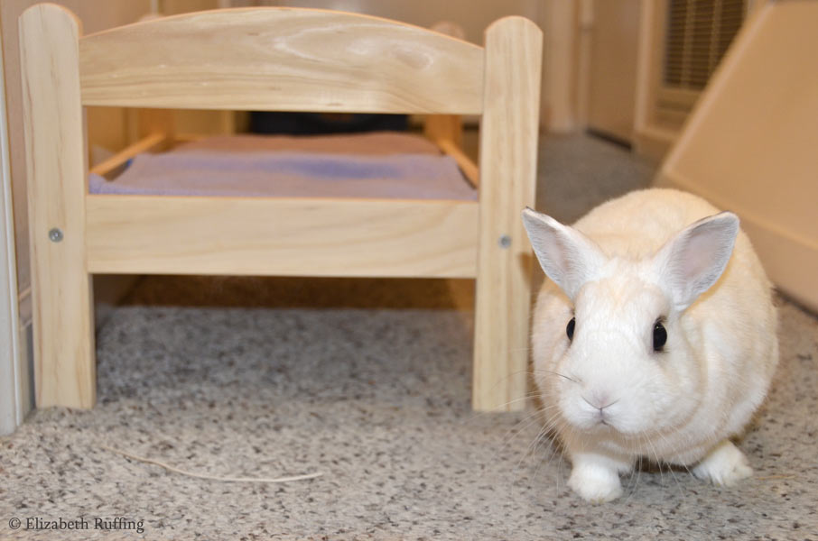 Oliver Bunny with his IKEA doll bed, by Elizabeth Ruffing