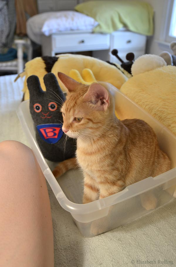 Juno kitten in my toy box with my Wonder Bunnies, by Elizabeth Ruffing