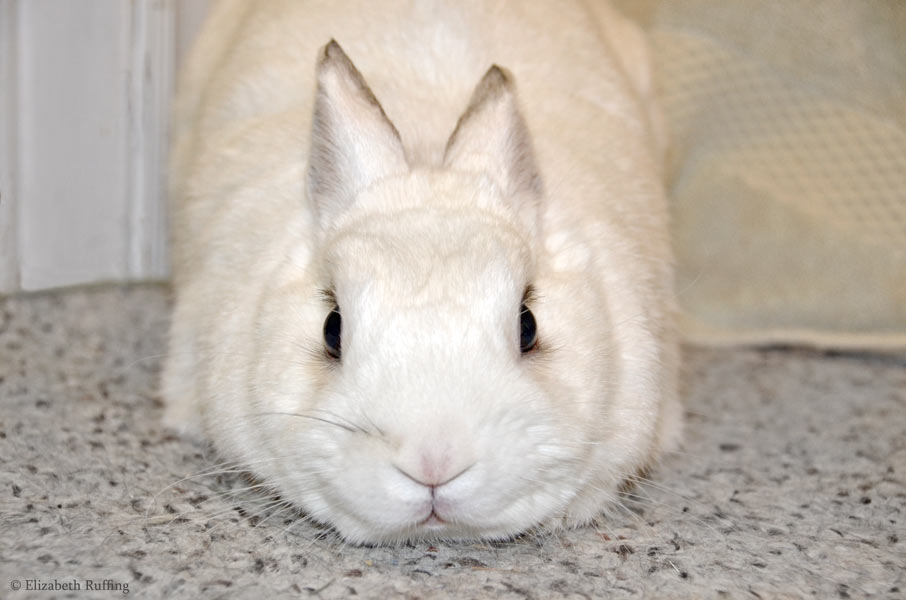 Oliver Bunny, by Elizabeth Ruffing