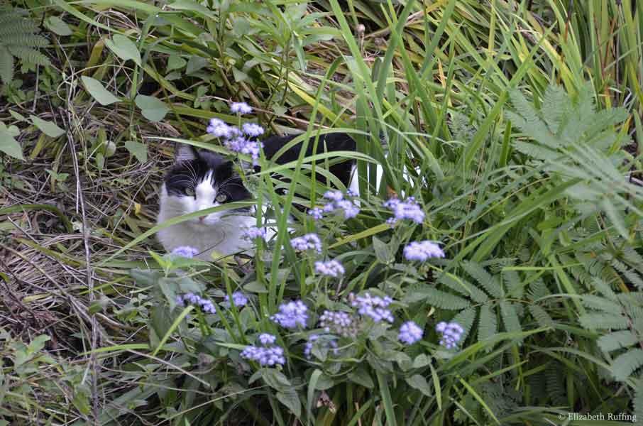 Trouble hiding in the garden, by Elizabeth Ruffing