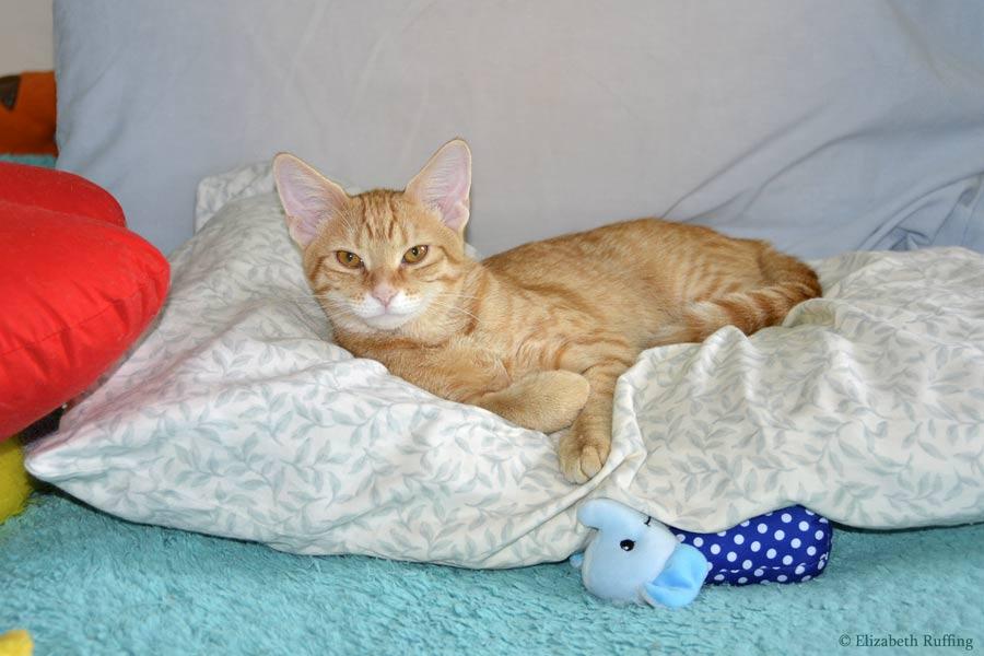 Juno, orange kitten lounging on pillow, by Elizabeth Ruffing