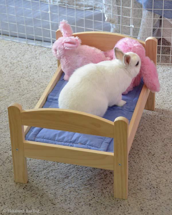 2018-03-22-DSC5974-oliver-bunny-pink-bun