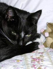 Black-and-white cat napping with a toy mouse