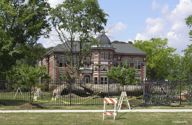 Town Hall after tornado, with 100 year old tree down