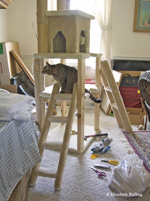 Kitty investigates cat gym reupholstering project