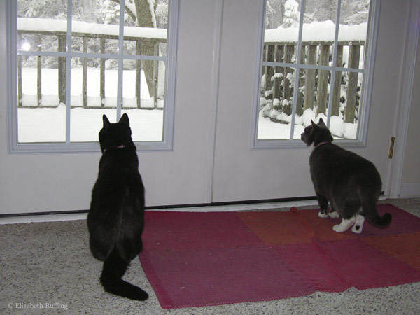 Cats look out the door at the snow